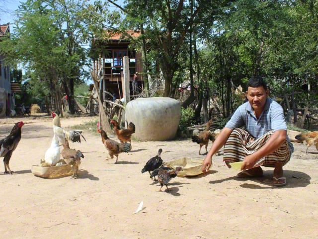 Community people enjoy growing their chickens