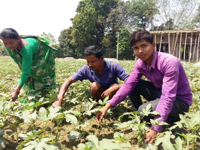 Vegetable Farming Training