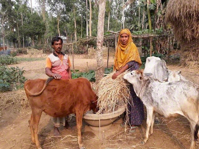 Improve family condition by rearing cow and goats.