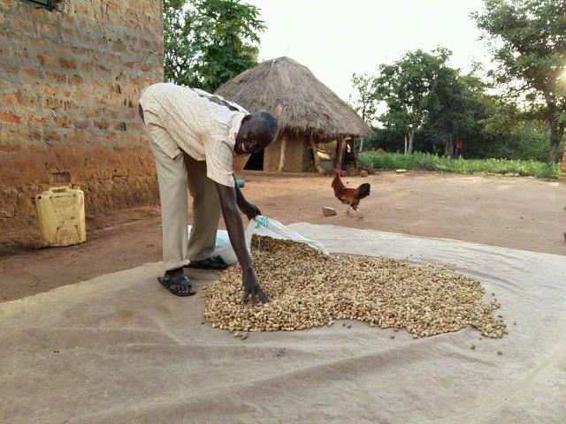 Groundnut seeds support
