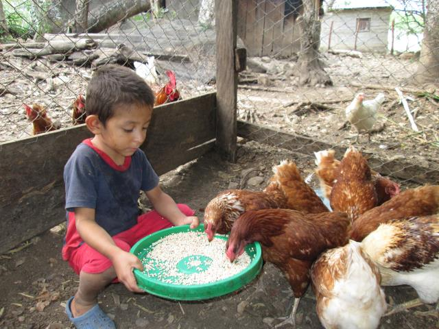 Poultry Keeping