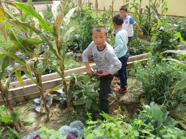 Children's Vegetable Garden