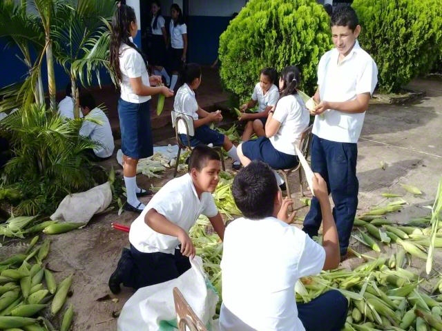 Student are sowing corn and vegetables