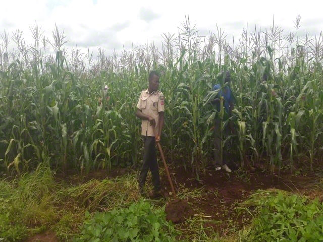 Programme farming inputs support