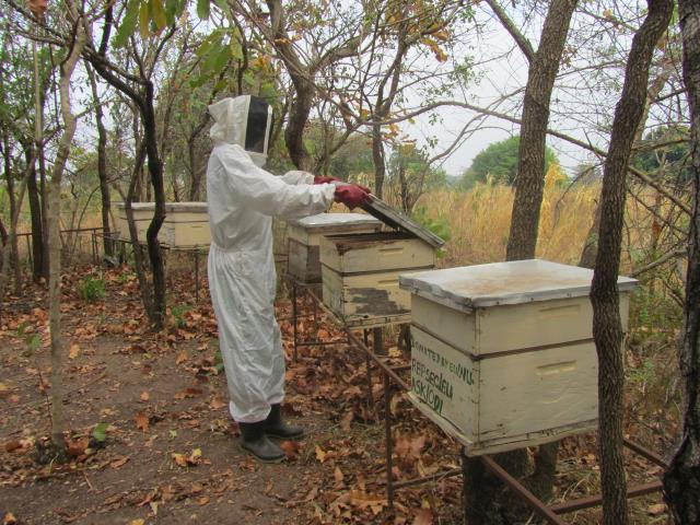 Beehive Project