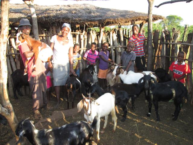 Goats for Income