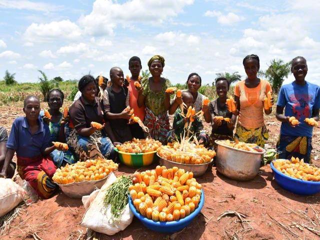 Support in Agricultural Inputs and Tools
