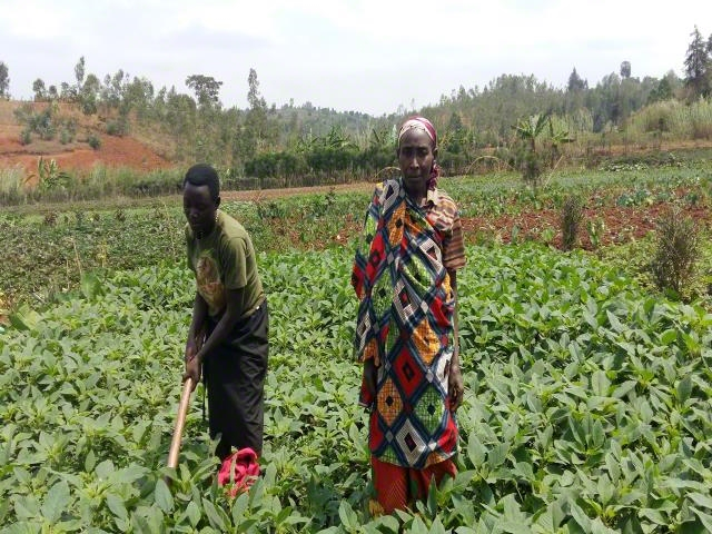 Vegetable Production Project